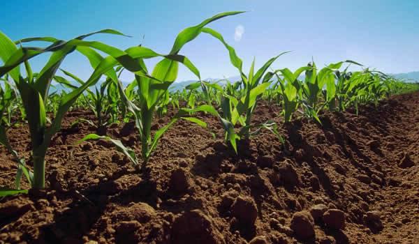 Productores se capacitan en manejo y conservación de suelos
