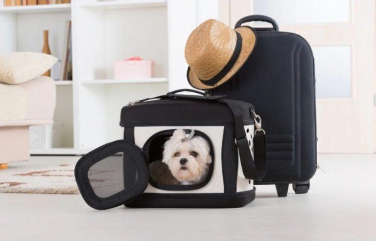 ¿Qué tenés que tener en cuenta para llevar a tu mascota de vacaciones?