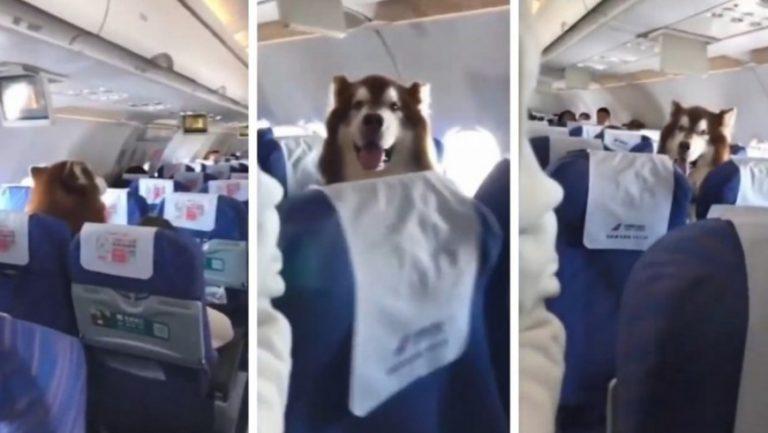 El tierno video viral del perro que viajó junto a su dueña en el avión