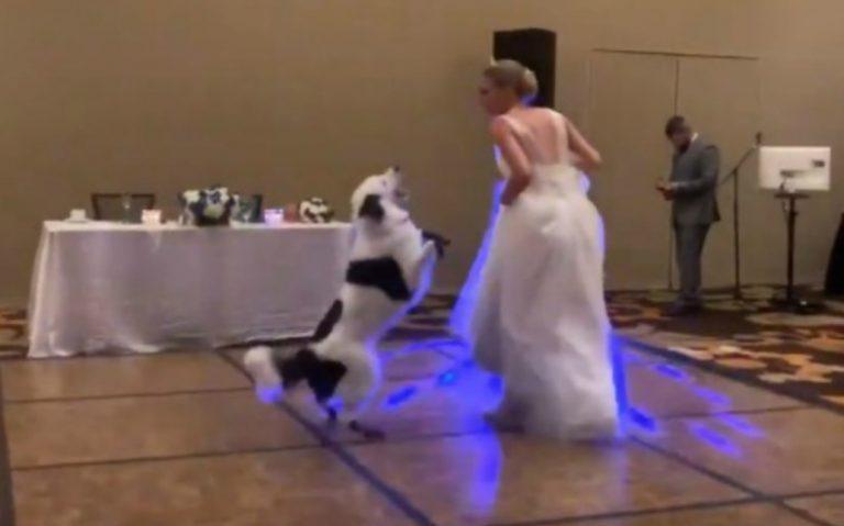 Una novia bailó con su perro en la fiesta de casamiento