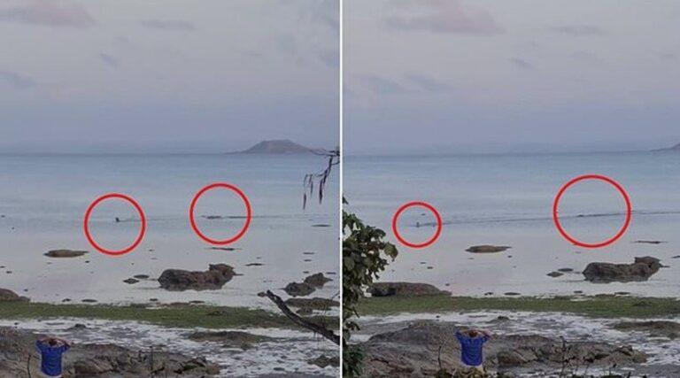 Un perro logra escapar de un cocodrilo que lo persigue en el mar