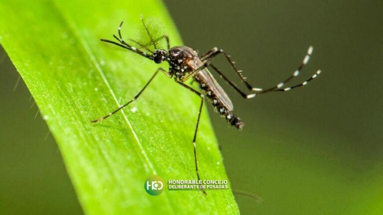 """Posadas creó el plan """"Barrera Natural Contra los Mosquitos Transmisores de Enfermedades Vectoriales"""""""